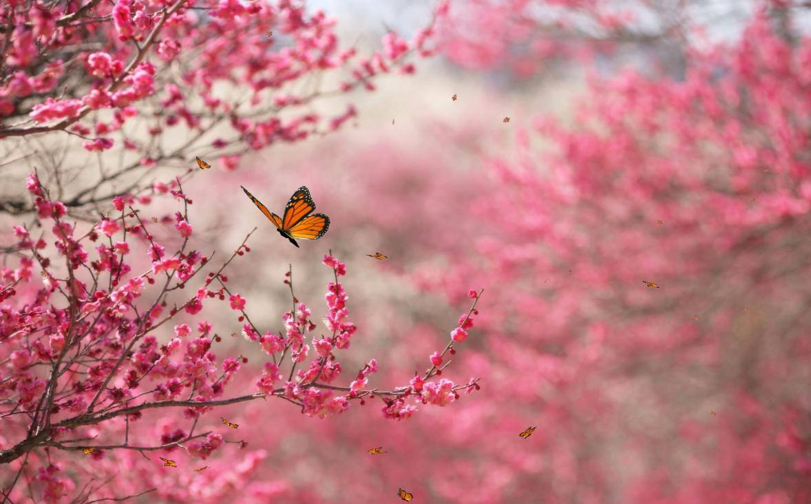 butterfly in the branches